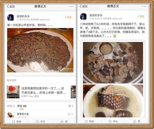 女子把食穿山甲的照片,貼在微博上,引起網民圍觀。