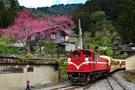 圖為阿里山的森林火車。