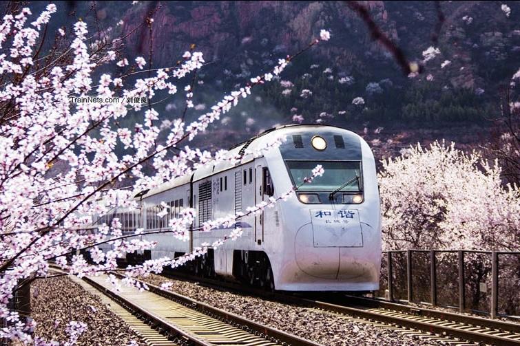 居庸關鐵路穿越花海。