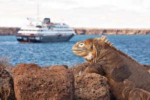 加拉帕戈斯群島的著名海鬣蜥。(銀海圖片)