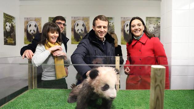 法國總統馬克龍去年12月和家人到動物園參觀大熊貓寶寶「圓夢」。