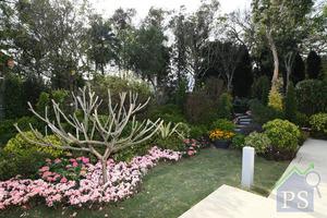 項目室外部分種植不少植物,營造綠化空間。