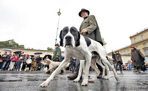 德國重視狗隻權益,狗主需要繳付狗頭稅及接受訓練,方可取得養狗牌照。(路透社資料圖片)