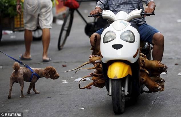 廣西玉林狗肉節,成為狗隻的受難節。