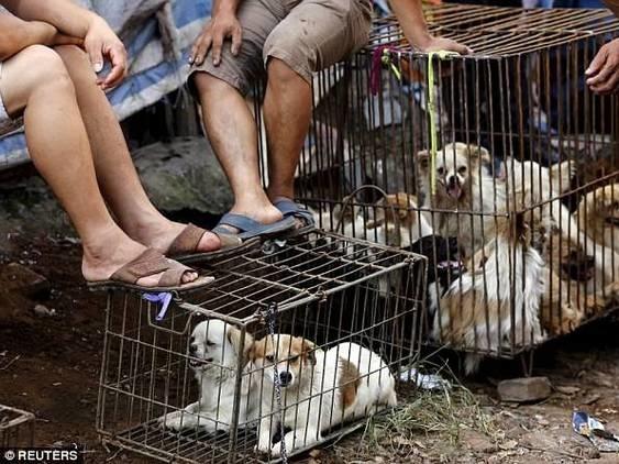 內地吃狗肉成風,引來愛護動物人士反對。