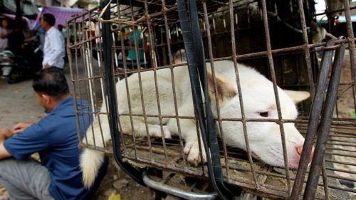 廣西玉林狗肉節,多年來惹來大量批評。
